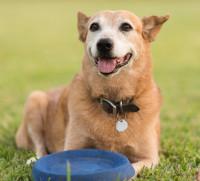 Un chien peut apprendre tout au long de sa vie