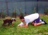 Le bon âge pour commencer l'éducation du chien