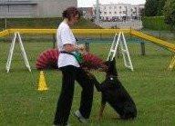Les outils pour une bonne éducation du chien