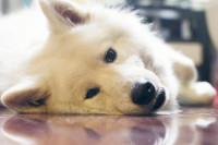 Faut-il faire dormir son chien dehors ou bien dans la maison ?