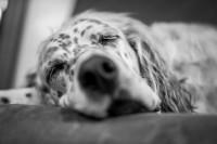 Que faire si mon chien refuse de dormir dans son panier ou sa niche ?