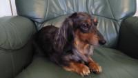 Mon chien préfère le fauteuil de son maître à son panier : que faire ?