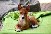 Quand et comment éduquer son chien à dormir dans sa niche ou son panier ?