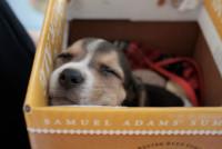 Les difficultés d'adaptation chez le chien