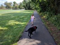 Des solutions pour aider le chien face aux nouveautés