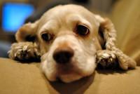 Comprendre les comportements des chiens