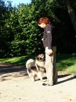Qu'est-ce que l'éducation canine