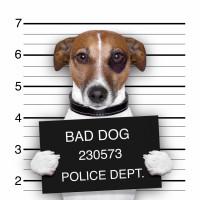 Ce qu'il faut éviter quand on donne une punition à un chien