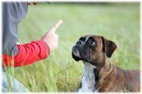 Comment faire pour que la punition du chien soit efficace ?