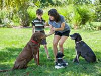 Apprendre à son chien à se concentrer et à écouter