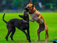 Comment réagir quand deux chiens se bagarrent ?