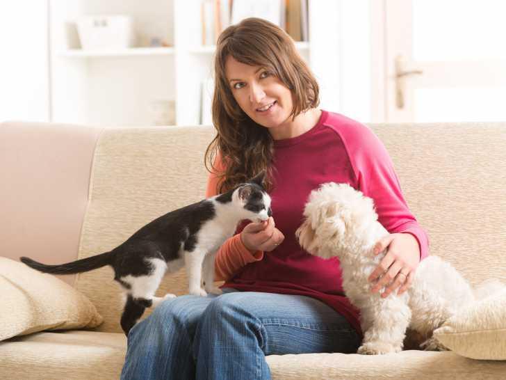 Comment présenter des chiens en toute sécurité ? | Pawshake Blog