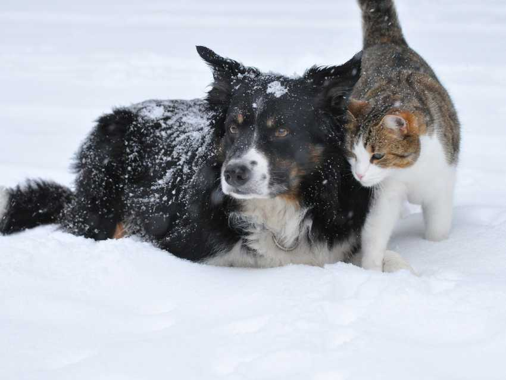 Présenter votre nouveau chaton à vos autres animaux de compagnie