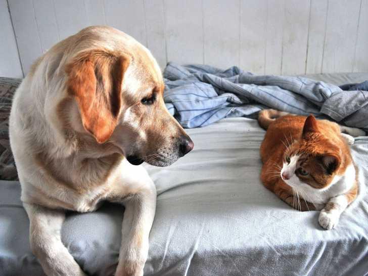 rencontre chien et chat adulte