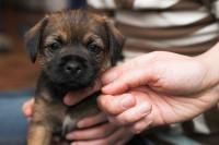 Origine de l'anxiété de séparation du chien