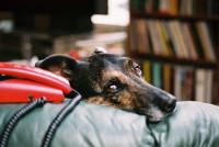 La solitude chez le chien et ses conséquences