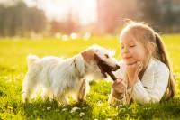 Un chien à la maison : les risques