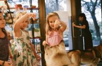 Quelles sont les causes des morsures de chien sur les enfants ?