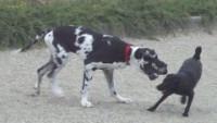 Pour le chien, le jeu peut avoir un rôle éducatif