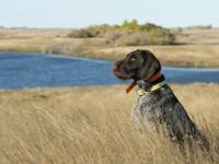 Le chien chasseur