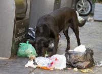 Le chien poubelle