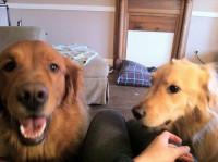Le chien est jaloux des autres relations de son maître
