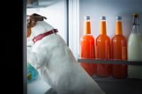 La prévention, meilleur moyen d'éviter que le chien vole