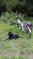 Pourquoi le chien court-il derrière les vélos et les voitures ?