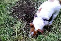 Comment empêcher son chien de creuser le jardin ?