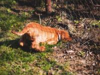 Les raisons et envies qui poussent un chien à creuser des trous