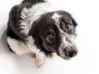 Votre chien souhaite communiquer ses besoins et ses désirs