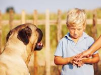 Le comportement d'un chien inconnu à l'approche d'une personne