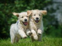 Principes généraux sur le caractère du chien