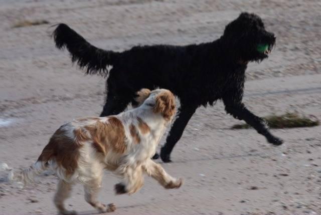 Communication canine : comprendre le langage des chiens
