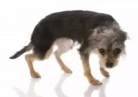 Les signaux d'apaisement canin : qu'est-ce que c'est ?