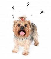 Le chien comprend-il le langage verbal ?