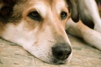 La durée du deuil du chien