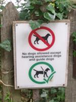 Où et comment promener son chien ?