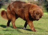 Les signaux envoyés par un chien qui ne veut pas être touché ou caressé