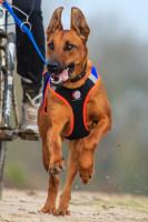 Le comportement du chien lors d'une session de Cani-VTT