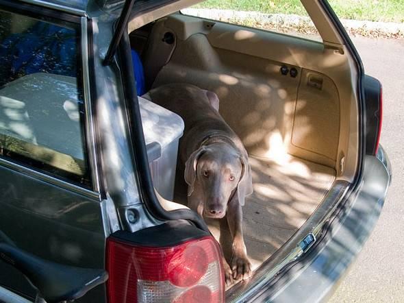 chien stress la peur du chien en voiture. Black Bedroom Furniture Sets. Home Design Ideas