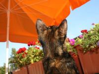 L'exposition du chien ou du chat au coup de chaleur : un acte puni par la loi
