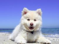 Choisir un lieu adapté à des vacances avec un chien