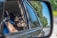 Effectuer un trajet en covoiturage avec un chat ou un chien