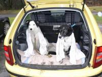 Quelques mesures à prendre pour le transport du chien en voiture