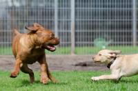 Le principe des pensions animalières
