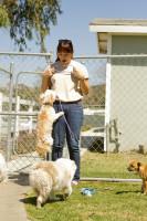 Adapter son chien à un changement d'environnement