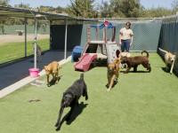 Choisir un mode de gardiennage pour son chien