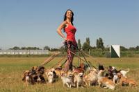 La garde d'animaux ou dog-sitter