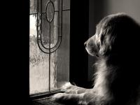 Si le chien ou le chat a dû attendre votre retour